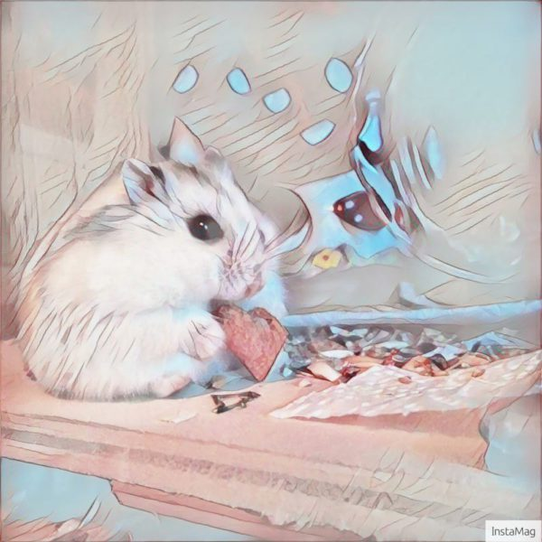 Hamster mit Android zu Kunstwerk verändert